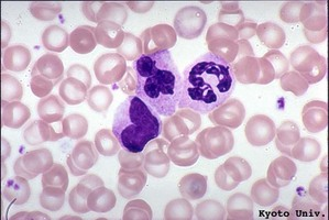 Blood_cells_1