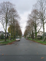 side-trees