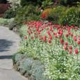 Butchart Gardens3