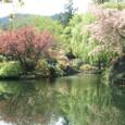 Butchart Gardens2