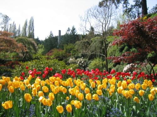 Butchart Gardens4